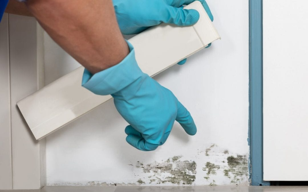 learn about how to prevent mold in the home