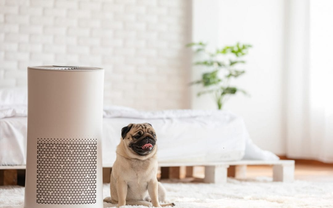 improve indoor air quality by using an air purifier